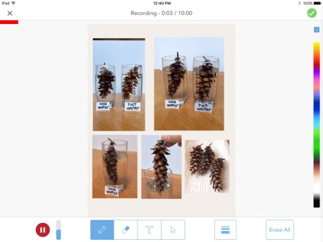 pine cone science Seesaw app