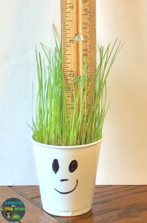 grass science experiment