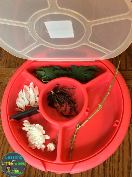 dissecting a flower science activity