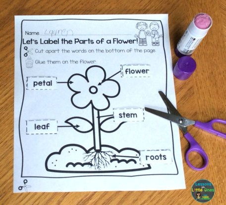 parts of a flower page cut and paste