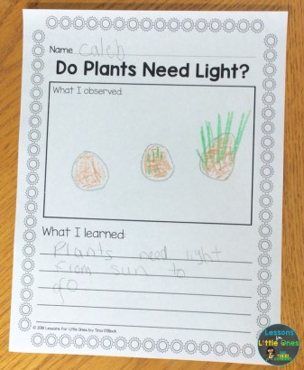 Do Plants Need Light? experiment page