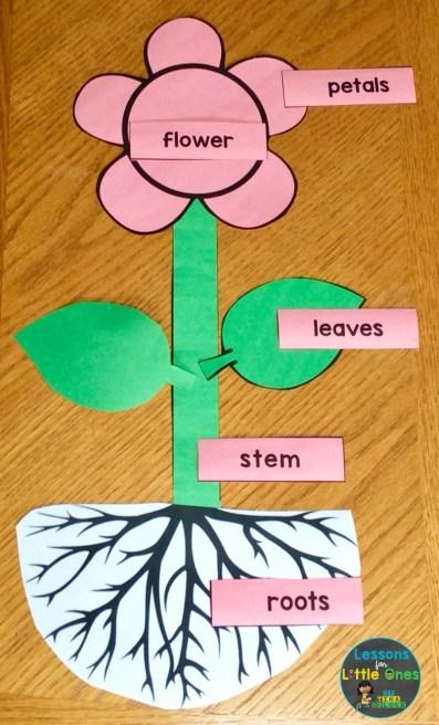 parts of a flower puzzle activity