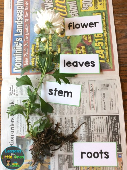 parts of a flower labeling activity