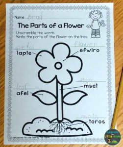 parts of a flower page