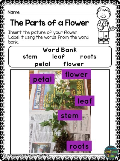 parts of a flower page using Pic Collage
