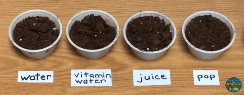 plant science experiment