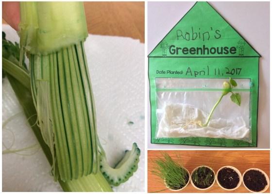 plants science experiments