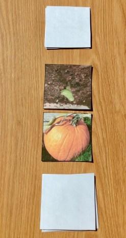 pumpkin life cycle card game