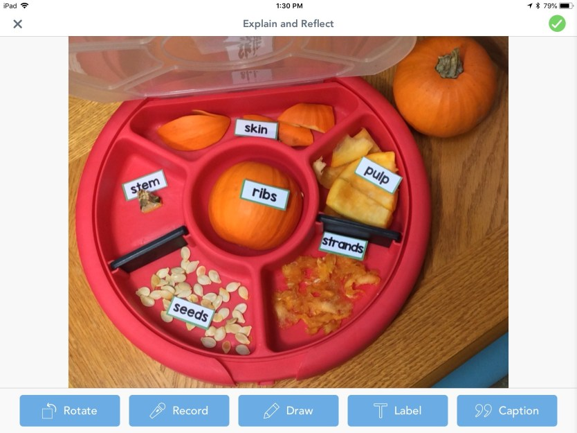 parts of a pumpkin labeling activity using the Seesaw app