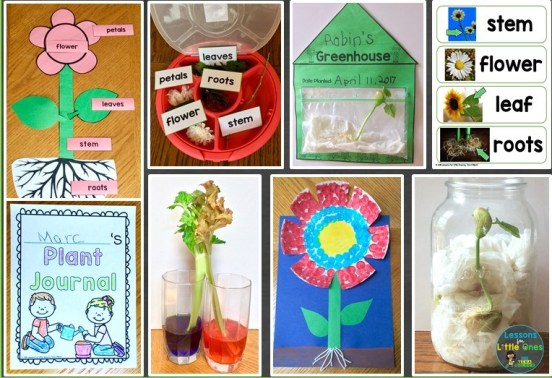 plants flowers science activities