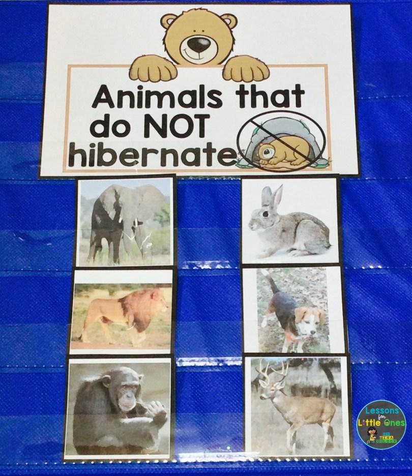 hibernating animals sorting activity