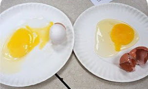 Martin Luther King Jr. egg activity