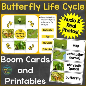 Butterfly Life Cycle Digital Print