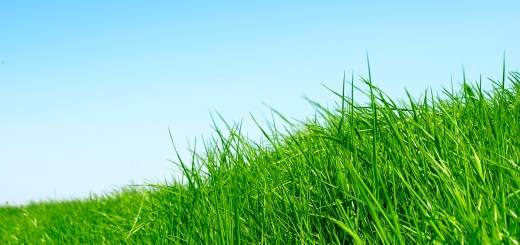 grass isn't greener