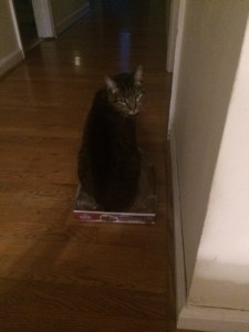 "Posing, hoping to partake in the ""cat in a box"" internet phenomena."