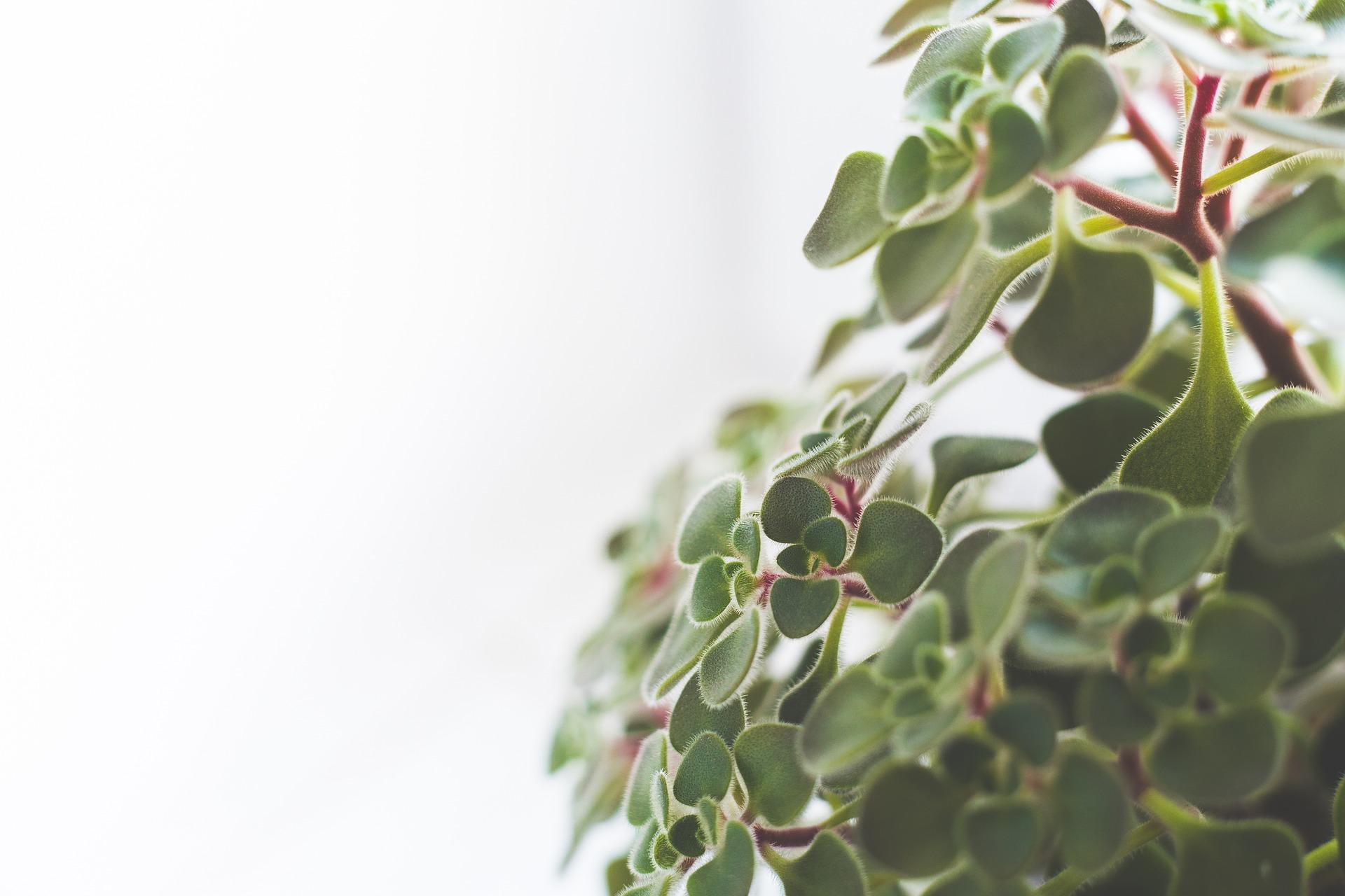 houseplants-791120_1920.jpg