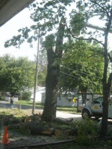 tree in driveway