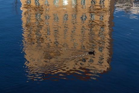 A duck floats on Spree river in Berlin, Germany