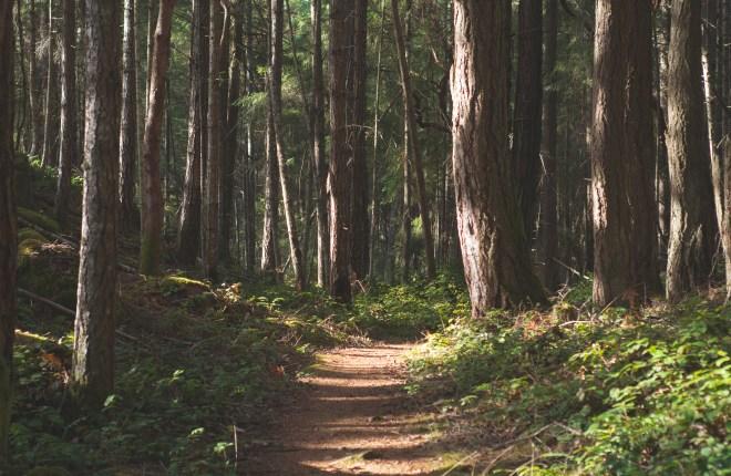 Forest path laptop.jpg