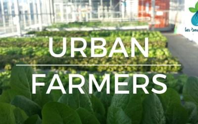 Meeting Urban Farmers in Switzerland