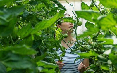 Agriculteurs Urbains : les «hors-cases»