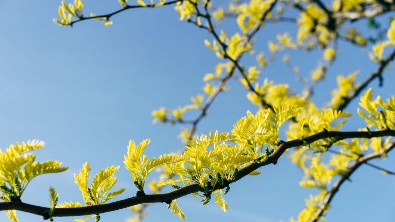 agroforesterie : arbres et agriculture