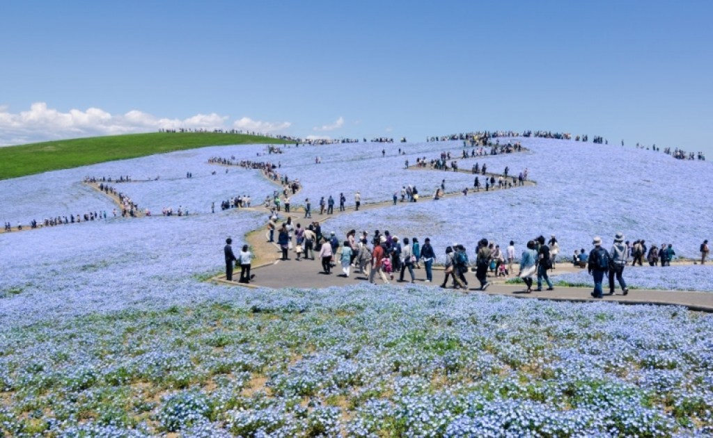 Photo of Hitachi Seaside Park