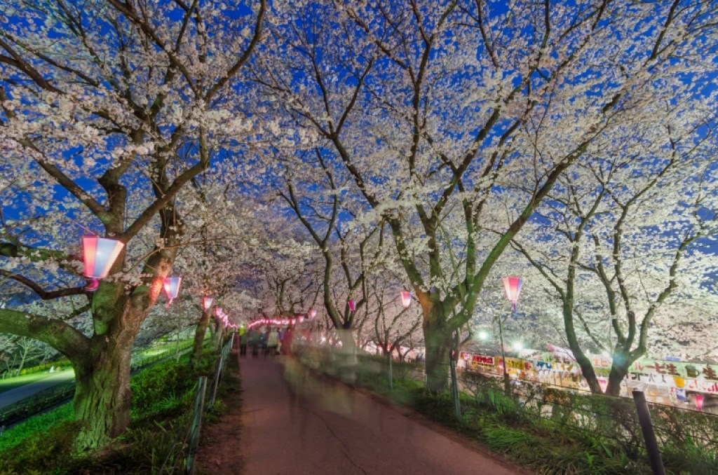 Photo of cherry blossoms at night