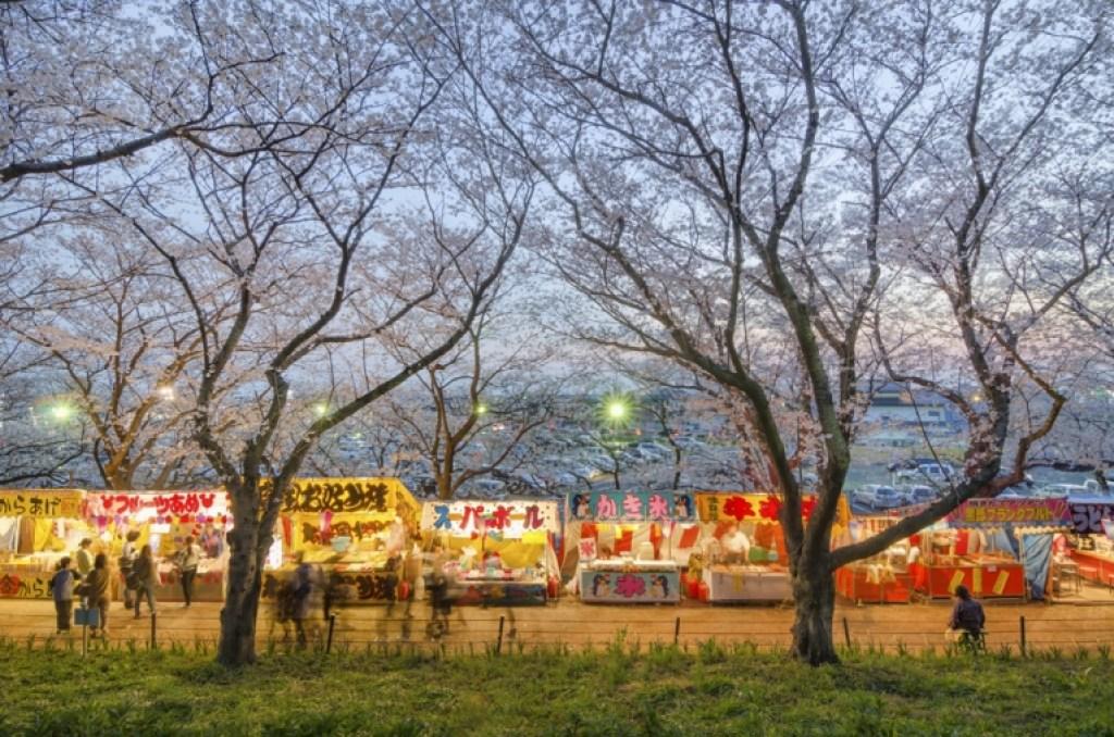 Photo of cherry blossom festival