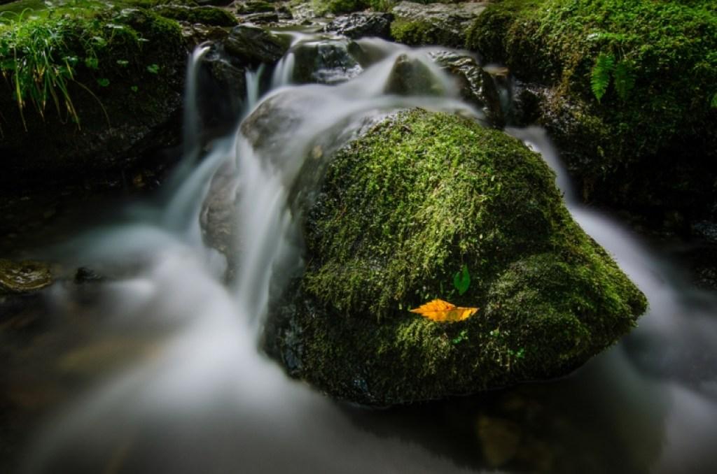 Photo of single autumn leaf