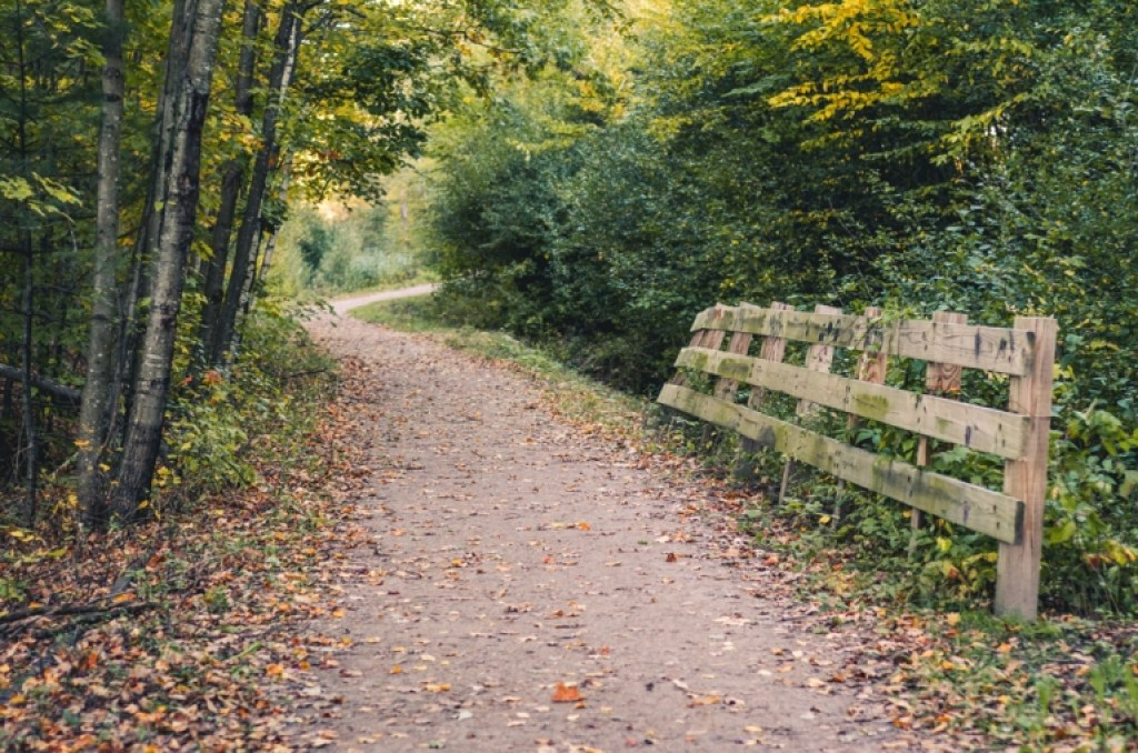 Photo of autumn path with leaves