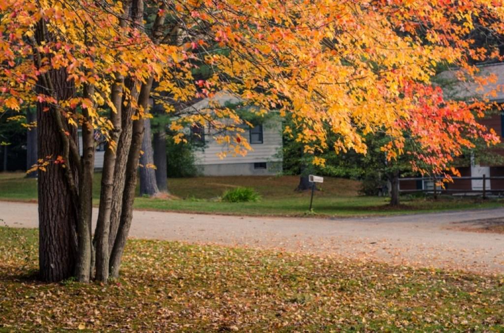 autumn front yard