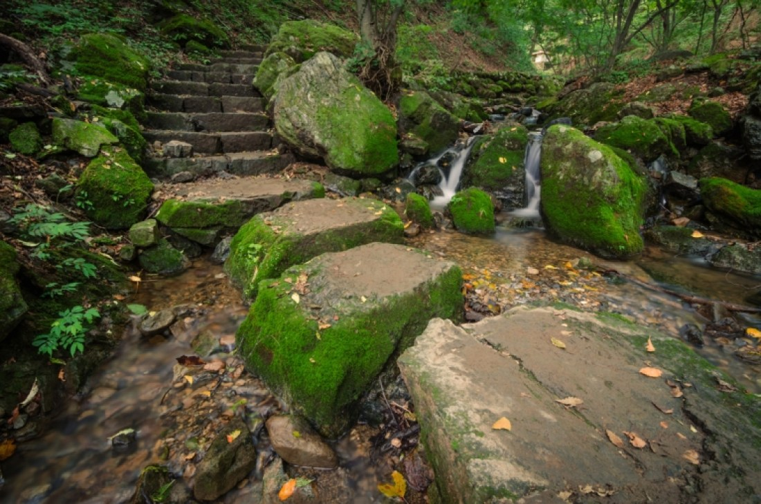 Stepping stones in stream