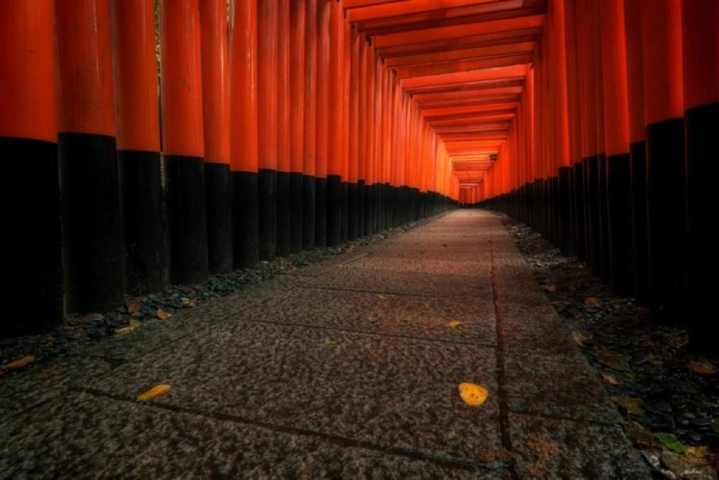 Torii gate path in Kyoto