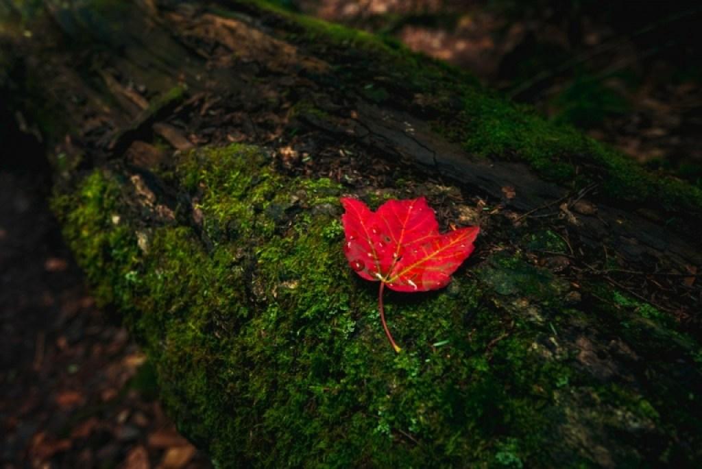 Autumn Leaf New Hampshire