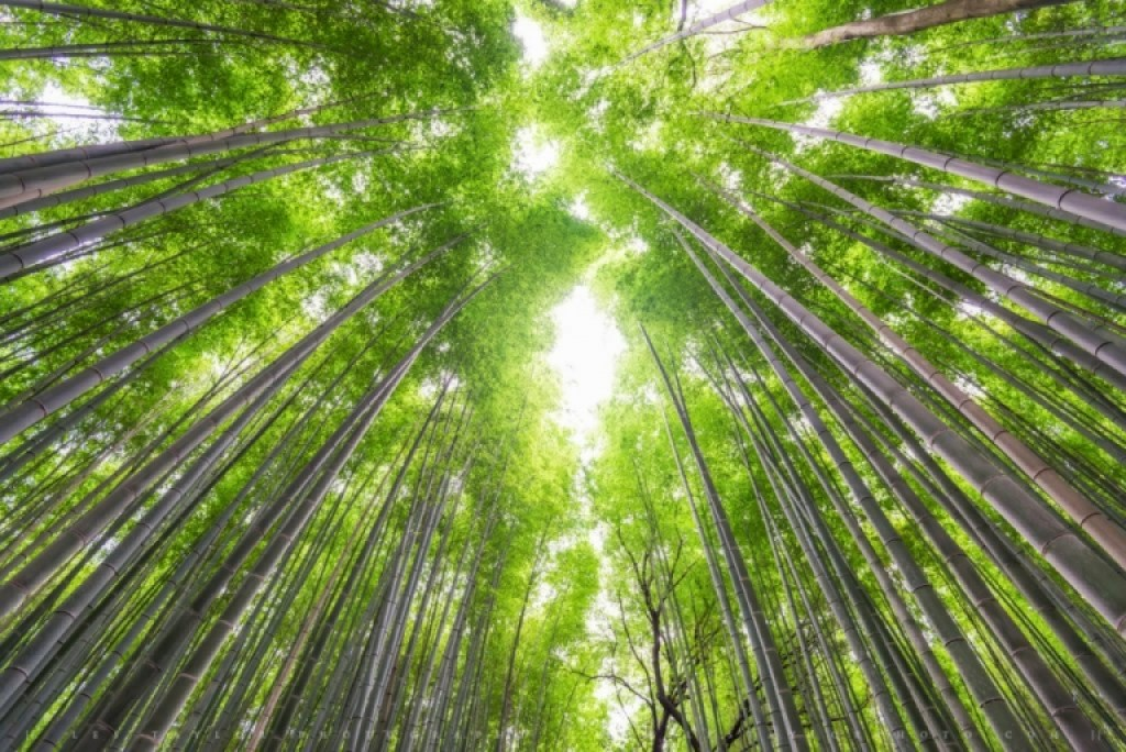 Photo of Bamboo Forest Kyoto