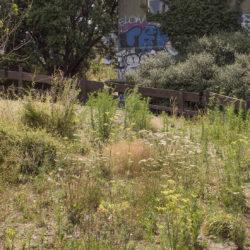 Weeds # 12