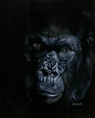 Gorilla in Shadow