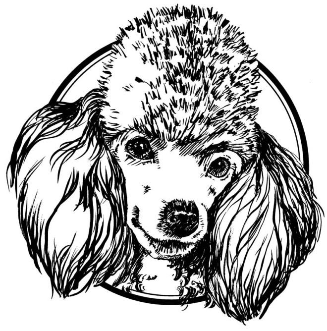 Poodle Line Art