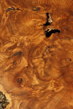 Volutes de bois peut-être due à une blessure