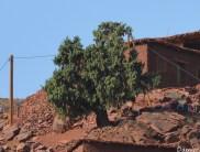 Maroc voyage Damien (6)