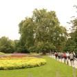 Platane d'Orient planté vers 1785 Jardin des plantes de Paris (20)