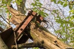 Yannick Morhan, foret de Verdun, Meuse, arbre observatoire, guerre-12