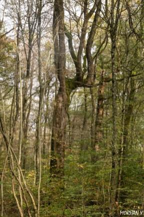 Yannick Morhan, foret de Verdun, Meuse, arbre observatoire, guerre-4