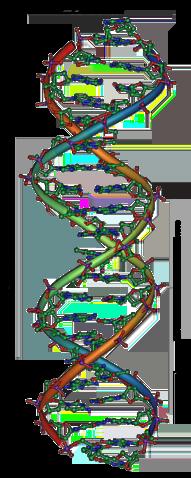 DNA (fonte: Wikipedia)