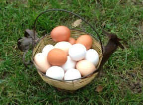 Eggs from our chickens