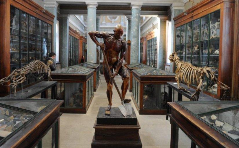 Ames sensibles, s'abstenir…Conservatoire d'anatomie de Montpellier
