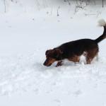 La neige, ce que je préfère !!!!