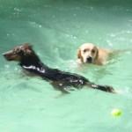 Groschien et Hope dans la piscine