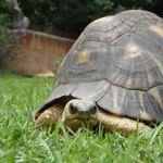 """Voici Caroline la tortue, de temps en temps Baballe m'appelle """"Bill"""", je comprends pas pourquoi..."""
